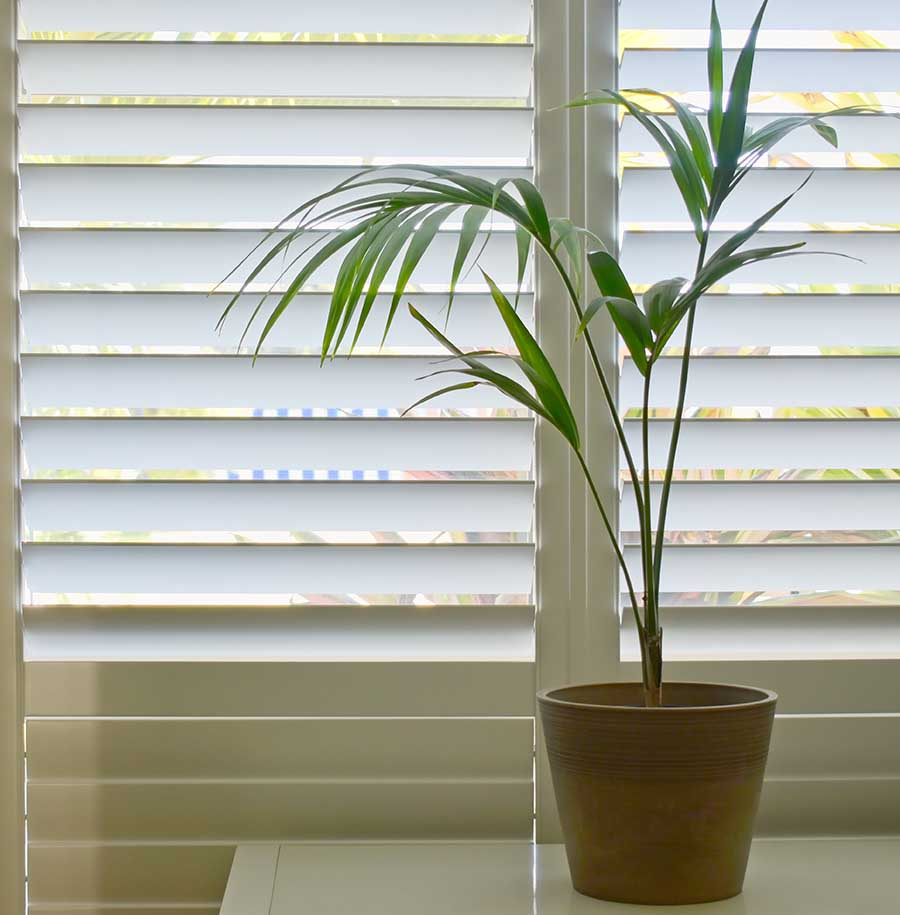 modern plantation shutters fitted with pot plant next to them